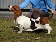 NewDown Bassets Theresia Di Sio