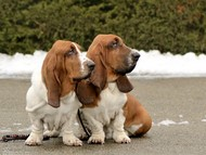NewDown Bassets Theresia DiSio + NewDown Bassets Urban Samurai