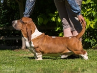 NewDown Bassets Urban Samurai